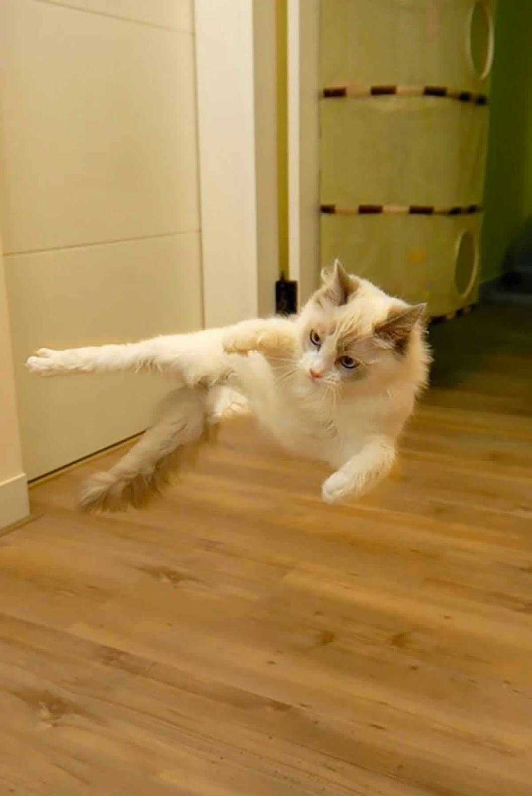 صور قطط النينجا