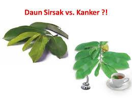 Obat Herbal Manjur: BAHAYA/efek samping MINUM air rebusan ...