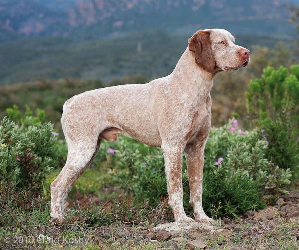 Illustration Dog Breeds
