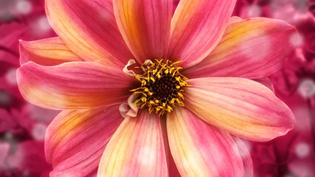Amazing Flower HD Wallpaper