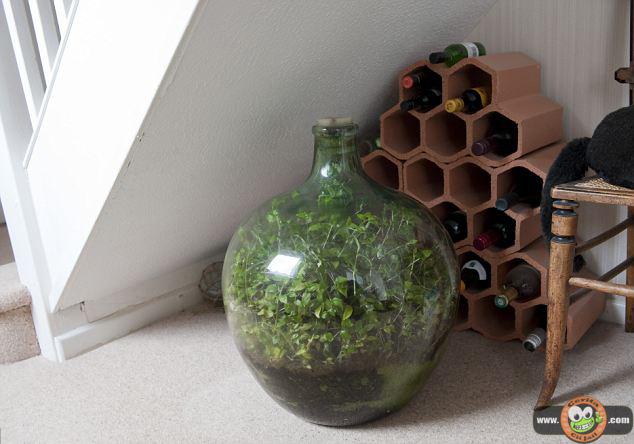 http://www.ceritaciijail.com/2013/05/Tanaman-Ini-Tumbuh-Dalam-Botol-Kedap-Udara-dan-Air-Selama-40-Tahun.html