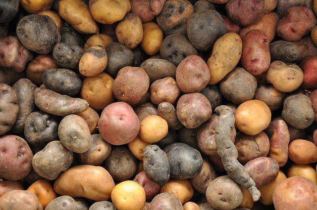 Rollo patatero por qu hay patatas mejores para fre r - Tiempo de cocer patatas ...