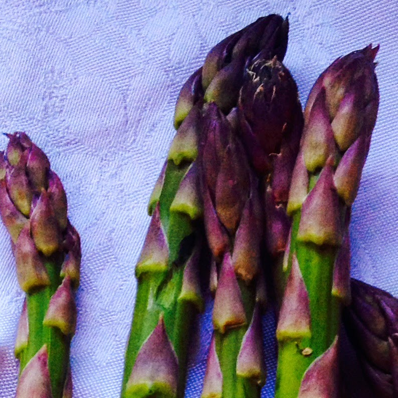 Fresh Asparagus Photo