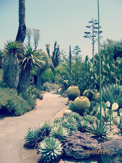 Huntington Gardens- Desert Cacti