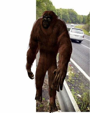Yowie Bigfoot