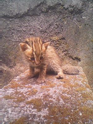 Anak Kucing Lemah Tidak Mau Makan Pertolongan Pertama Pada