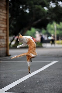 funny cat dance image