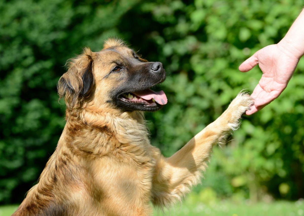 Como Educar A Un Perro Adulto Adoptado Blog Patitas Y Sonrisas