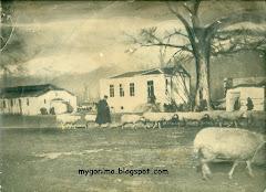 ΓΟΝΙΜΟ 1946