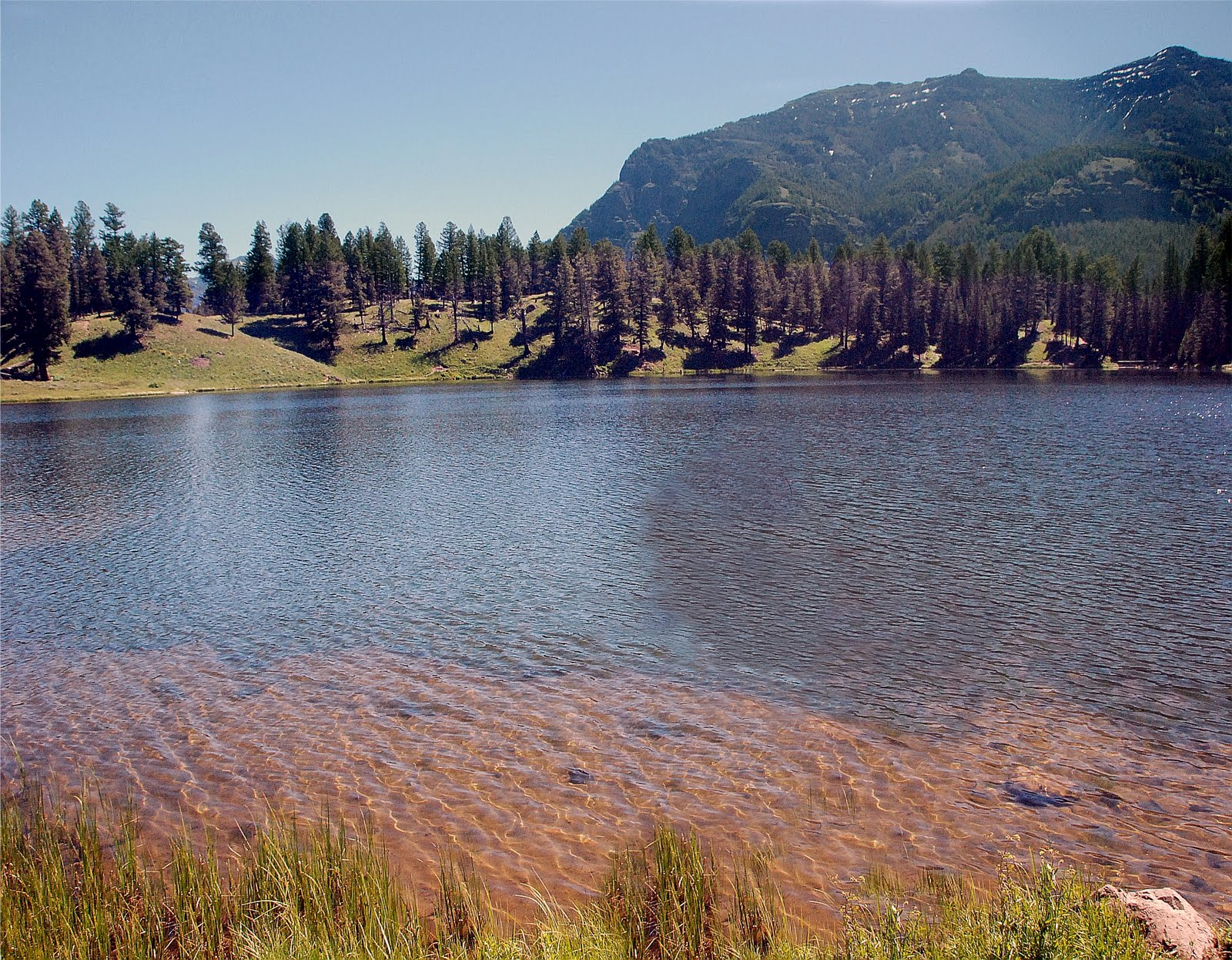 Fly fishing in yellowstone national park monster cutthroats for Yellowstone fly fishing