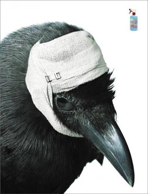 crow ,bird,animalia,chordata,aves,passeriformes,corvidae,corvus