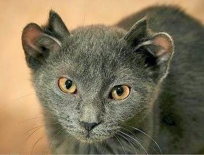 Картинки по запросу йода кот
