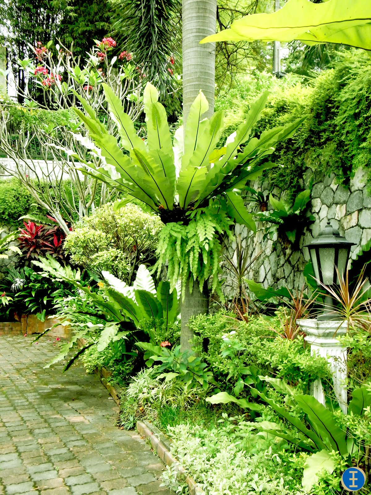 Christopher ong my footsteps my dreams beautiful for Tropical garden designs