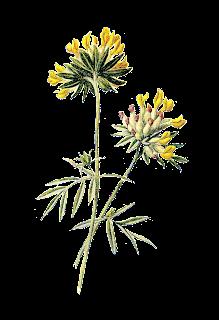 stock flower image wildflower