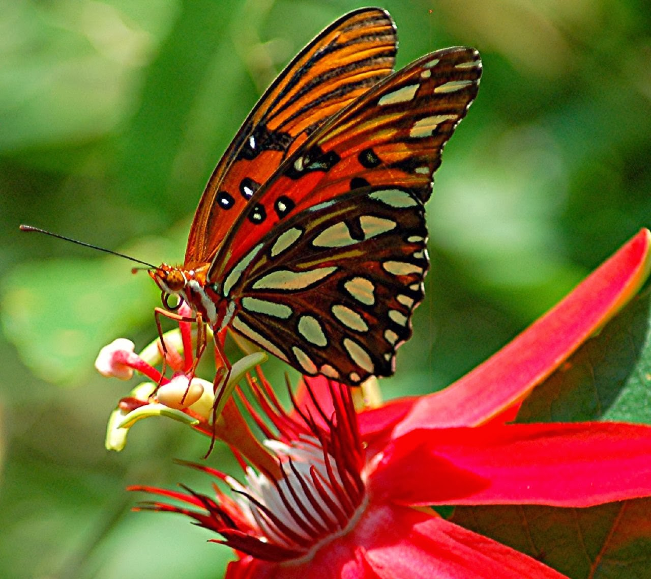 rules of the jungle symbiotic relationship of butterfly and flower