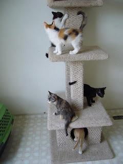 kitten houses