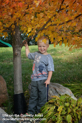 young boy near fall colors tree