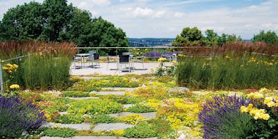 foto 7 jardin encima del techo con muzgo y flores