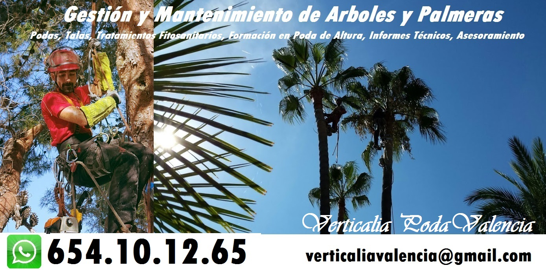Verticalia Poda Valencia. Gestión de Arboles y Palmeras.