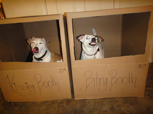 funny dogs, dog picture, dog kissing booth