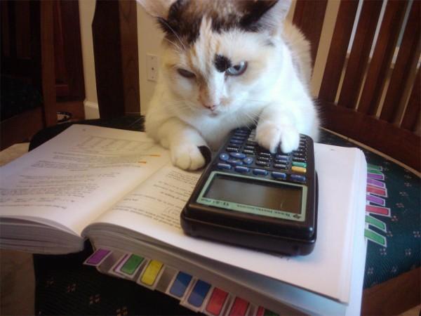 http://2.bp.blogspot.com/-R7gM0sCZ8Ek/UaWfauSRpSI/AAAAAAAACa8/8IyACElxB4I/s1600/cat-maths.jpg