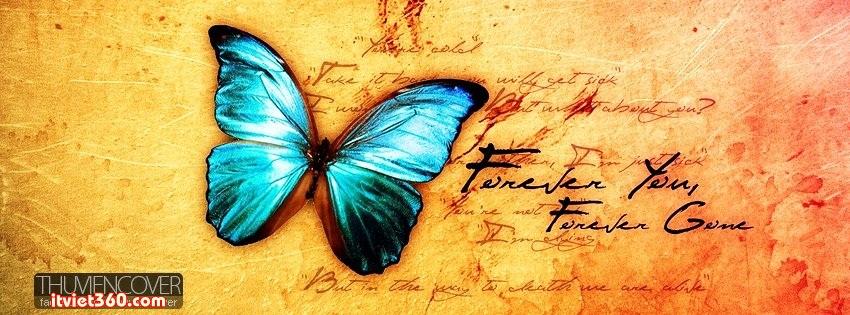 Ảnh bìa cho Facebook độc nhất - Cover FB timeline, bướm bay