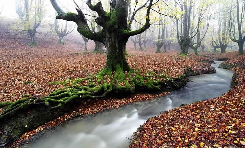 غابة الطحالب