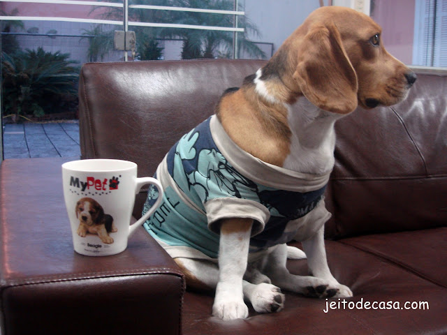 meu beagle