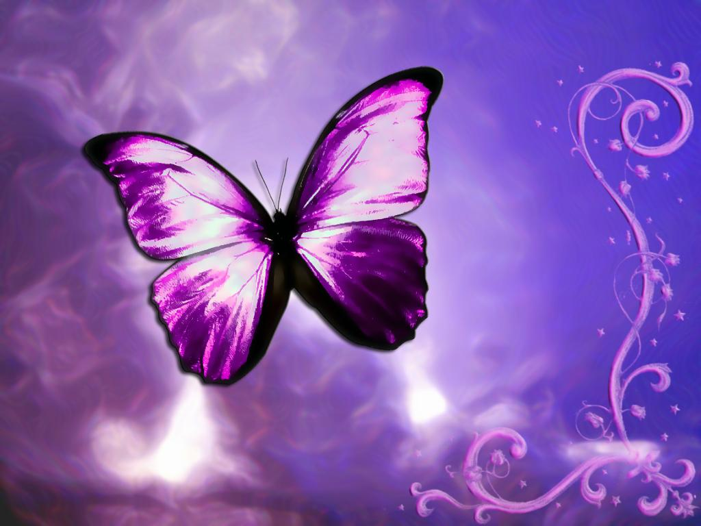 Purple fantasy butterfly postcard hd wallpaper