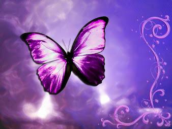 #3 Butterfly Wallpaper
