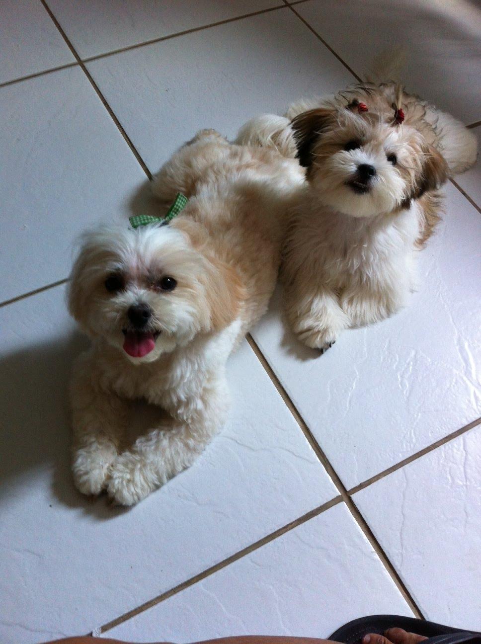 Paquita  e  Sapeca, amiguinhas inseparáveis!
