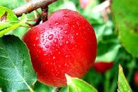 Manfaat dan khasiat Buah Apel