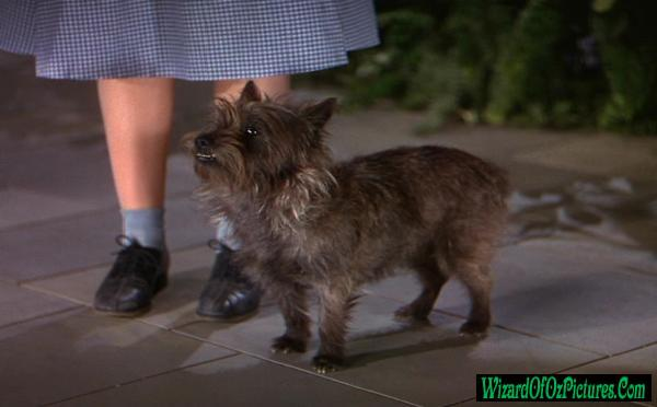 Name Of Little Dog In Wisard Of Oz