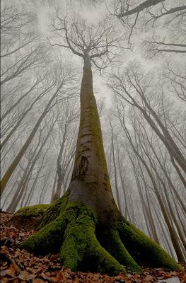 Un árbol demasiado alto enmedio del bosque encantado