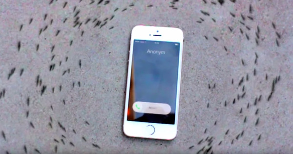 The Reason These Ants Are Circling An iPhone Is Actually Kind Of Creepy