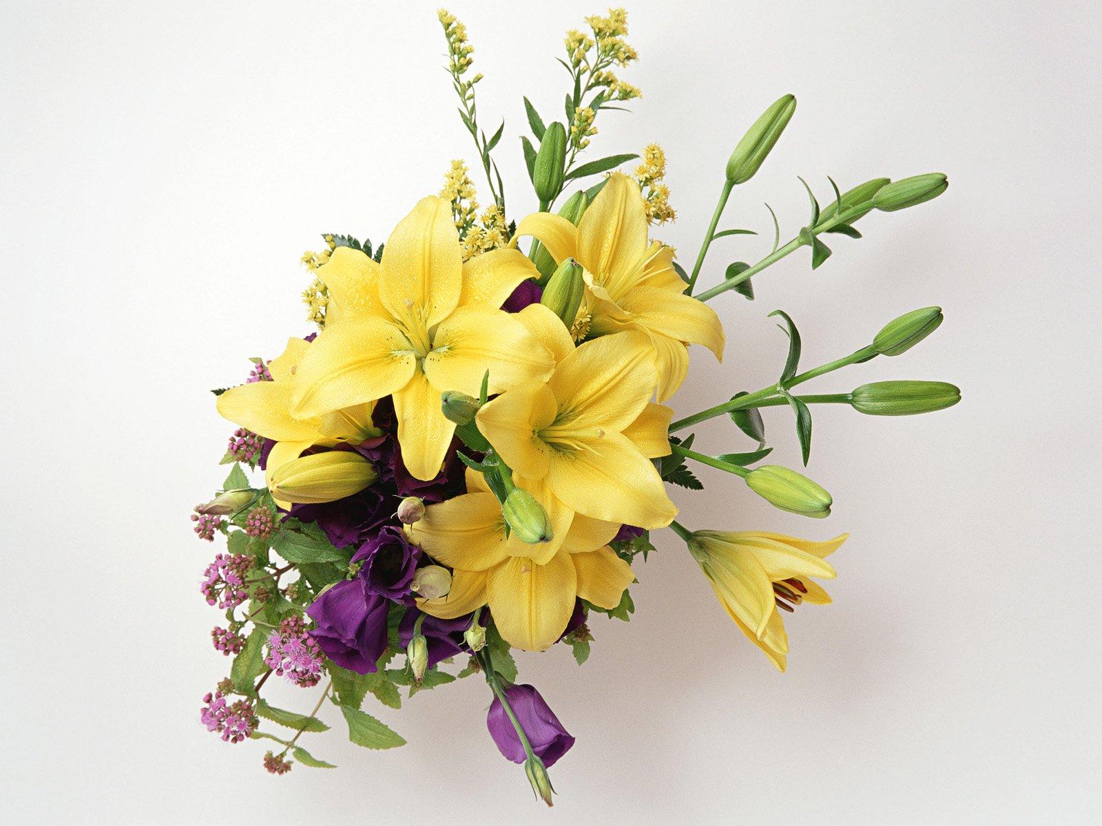 http://2.bp.blogspot.com/-R8uG7aLxgU4/TZj5SzOMhcI/AAAAAAAAANY/L4oZToZZDIc/s1600/Beautiful_Flowers_9954_1600_1200.jpg