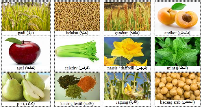 kelabat, gandum, aprikot, narsis, kacang arab