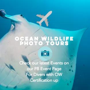 Join Ocean Wildlife Photo Tours