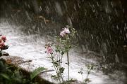 Ma voi lo sapete quanto è bella la pioggia d'estate?
