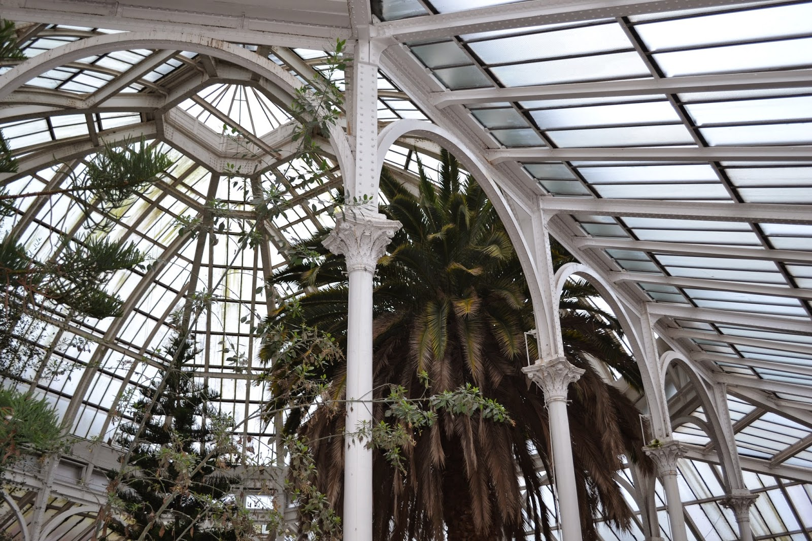 Victorian glasshouse roof with palm trees