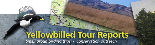 Yellow Billed Tours Reports