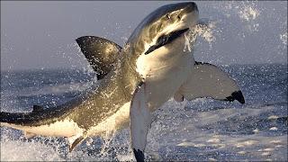 Imagenes de tiburones