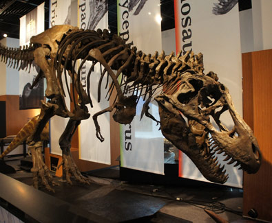 suasana natal di singapore, liburan natal dan tahun baru, mengenal dionosaurus, masa prasejarah, science centre singapore,