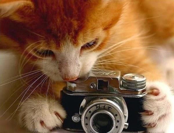 gato tomando una foto
