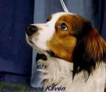 Kissmo 2001-2011