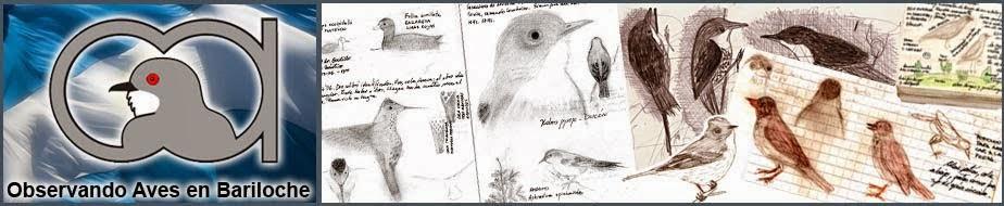 Observando aves en Bariloche y sus alrededores