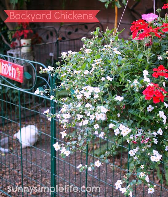 chicken coop,