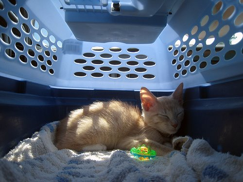 how to get a cat into carrier