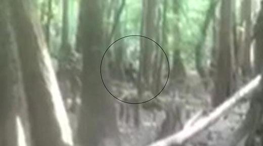 'Hombre Lagarto' filmado en los bosques de Bishopville