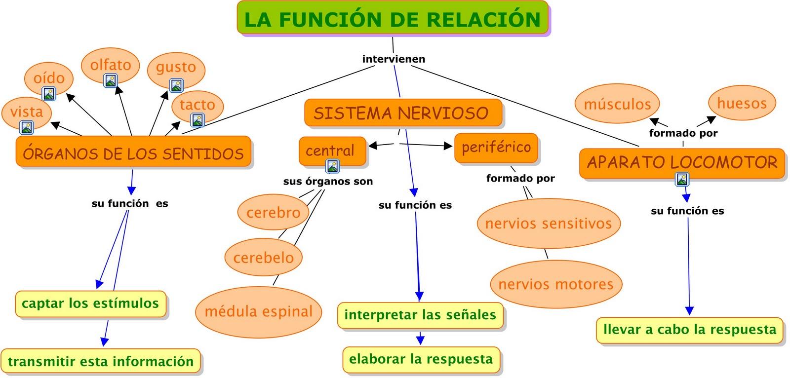 Mapa conceptual sobre la función de relación. Está muy clarito y